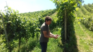 Paolo Verdi e il suo Pinot Meunier