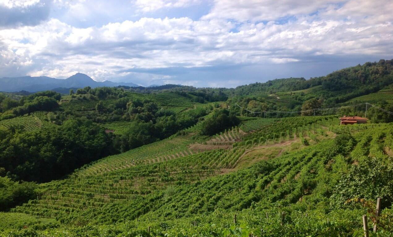 Vigneti in Nord Piemonte