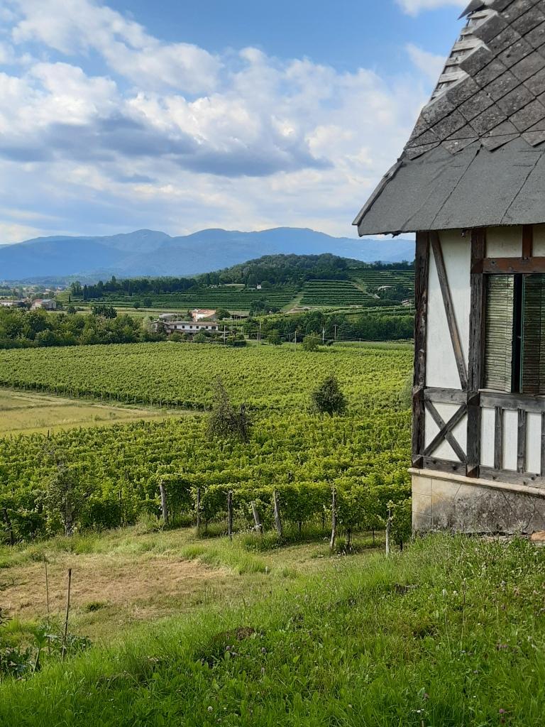 Vista sui Colli Orientali del Friuli